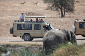 People in jeep admiring elephant