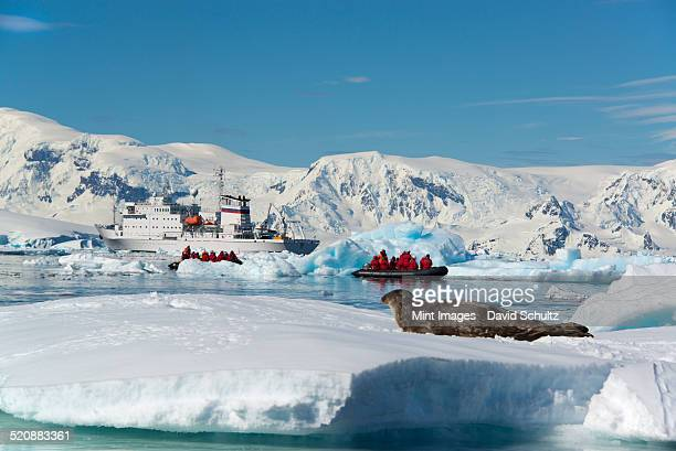 People in small inflatable zodiac rib boats on the calm water around small islands of the Antarctic. A crabeater seal on the ice.