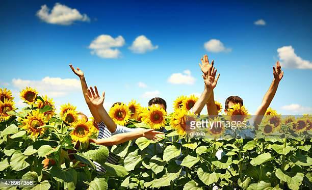 People in sunflower field.