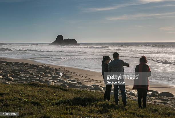 People line the bluffs overlooking Piedras Blancas Elephant Seal Preserve to view thousands of elephant seals sun themselves fight mate and give...