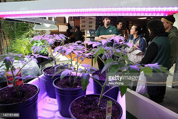 People listen to hydroponic expert Adam Rich to introduce hydroponic plant growing system in the weGrow marijuana cultivation supply store during its...