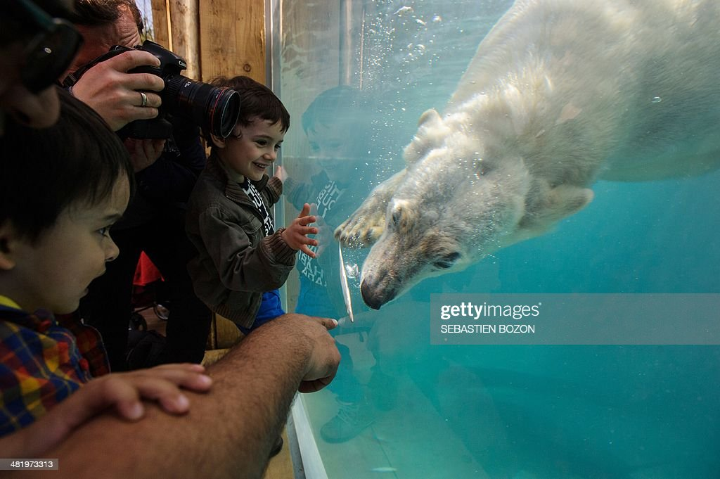 People look at a polar bear during the opening day of the new polar area at the zoo of Mulhouse on April 2, 2014.
