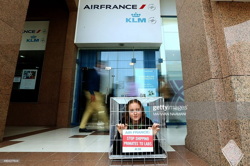 People look at an activist of the People for Ethical Treatment of Animals (PETA) imprisoned in tiny cage with a banner reading: 'Air France, Stop Shipping Primates to Labs,' outside Air France's main office in Dubai, on June 11, 2014. Air France is the only airliner that is still engaged in shipping monkeys to laboratories after many have banned the shipment of primates bound for experimentation, according to a statement by PETA.