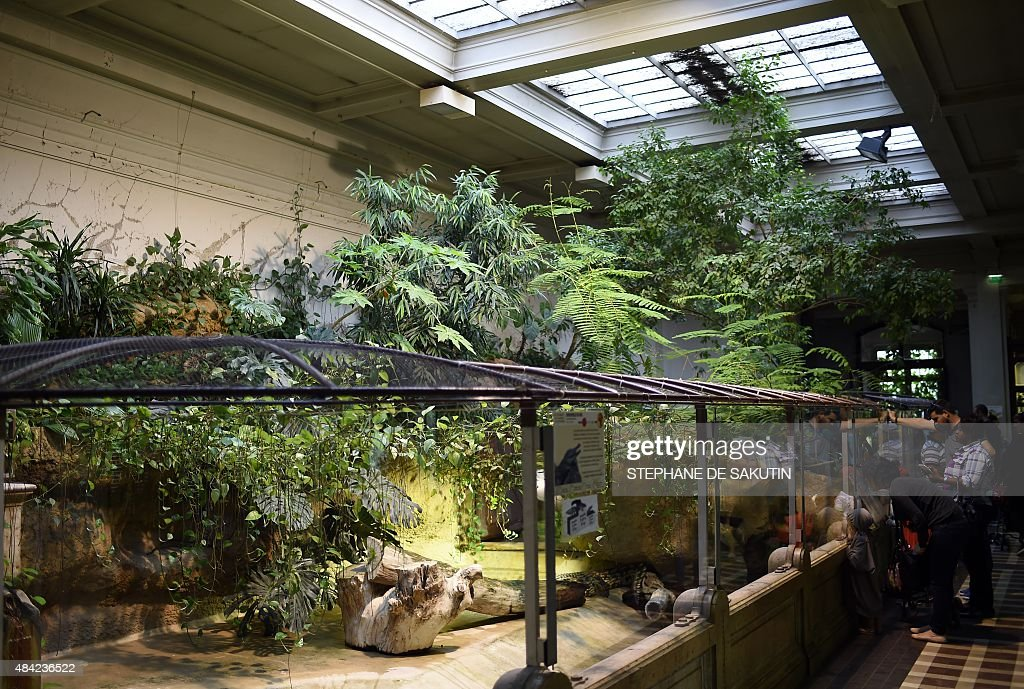 People look at crocodiles on august 16 2015 in the for Jardin plantes paris