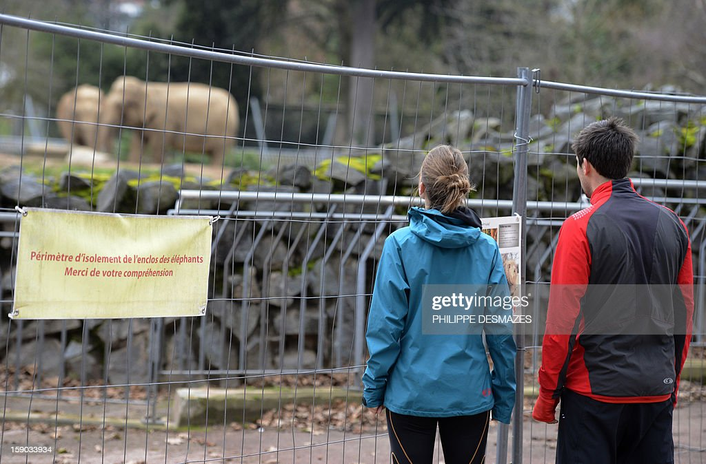 People look at elephants next to a placard reading ' Perimeter of isolation of the elephants enclosure' sticked on a barrier of enclosure during a demonstration to save Baby and Nepal, two elephants suffering from tuberculosis on January 6, 2013 at the 'Parc de la Tête d'Or' Zoo in Lyon, central eastern France. The two ailing middle-aged elephants that French officials have wanted put down have been given a Christmas reprieve after an appeal to President Francois Hollande and an Internet campaign to save them.