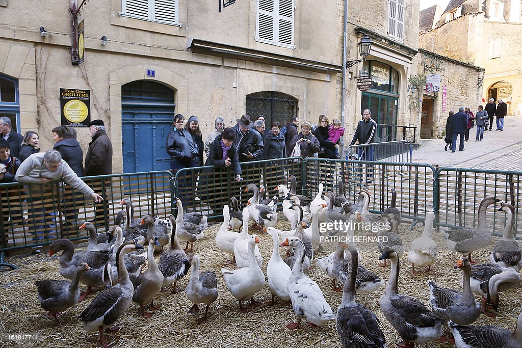People look at geese in a street of the city of Sarlat-la-Caneda on February 17, 2013 during the Fest'Oie festival.