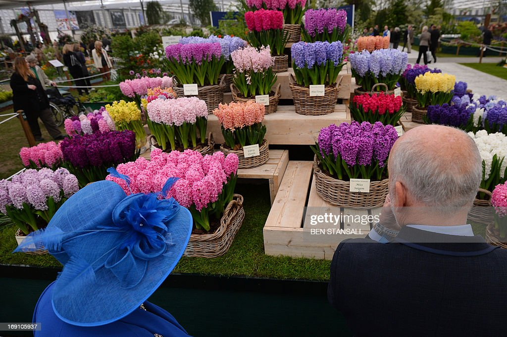 People look at Hyacinthus Orientalis flowers during the Chelsea Flower Show press day in London on May 20, 2013. The world-famous gardening event run by the Royal Horticultural Society (RHS) is celebrating its centenary year.