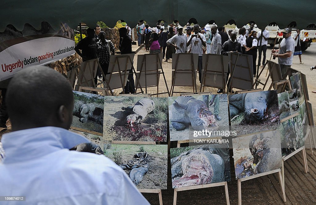 People look at photos of elephants and rhinos mutilated for their tusks and horns displayed by animal rights activist group Kenyans United Against Poaching members during a protest on January 22, 2012 in the Kenyan capital, Nairobi to put pressure on the government to declare the ongoing rampant poaching of particulalrly rhino and elephant , now at recently unprecendented levels, a national disaster. According to a recent report by the International Fund for Animal Welfare, IFAW, last year, -- 2012-- stands out as the annus horriblis (Latin for 'year of horrors') for the World's largest land mammal with statistics standing at 34 tonnes of poached ivory having been seized, marking the biggest ever total of confiscated ivory in a single year, in the 24 years since detailed records began, outstripping by almost 40 per cent last year's record of 24.3 tonnes.
