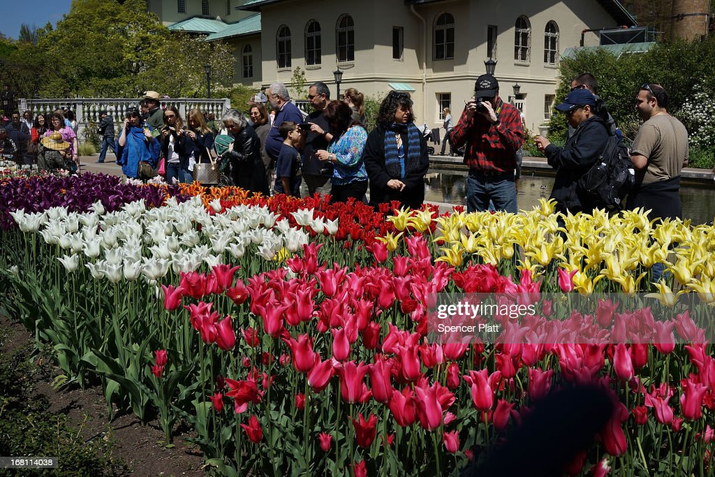 People look at tulips and other flowers at the Brooklyn Botanical Garden on May 5, 2013 in New York City. The botanical garden, which sits on 52-acres, features numerous gardens and a conservatory. The Brooklyn Botanical Garden is famous for their cherry blossoms, which typically bloom at the end of April and are a centerpiece of the Garden's annual cherry blossom festival which attracts thousands of visitors.