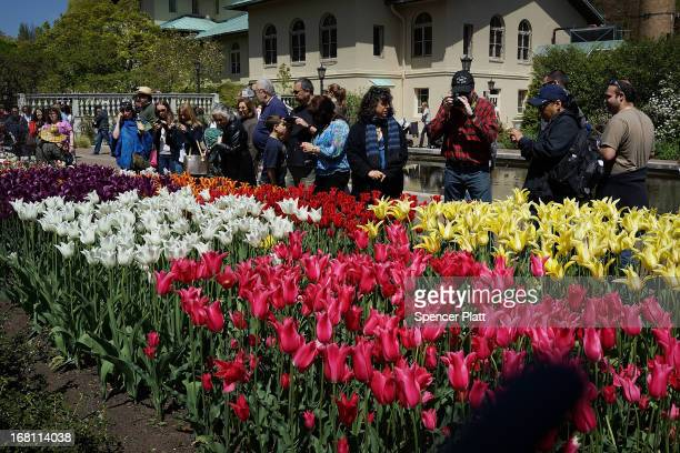 People look at tulips and other flowers at the Brooklyn Botanical Garden on May 5 2013 in New York City The botanical garden which sits on 52acres...