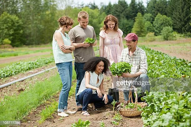 Personnes à la recherche de culture à base de légume