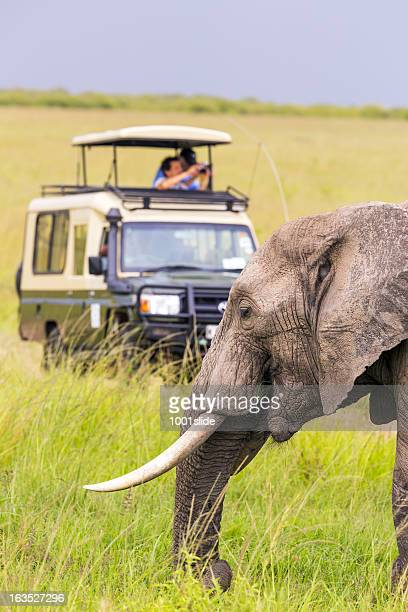 People on a safari viewing an elephant