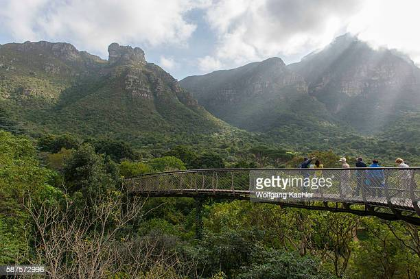 People on the Centenary Tree Canopy Walkway at Kirstenbosch National Botanical Gardens in Cape Town South Africa