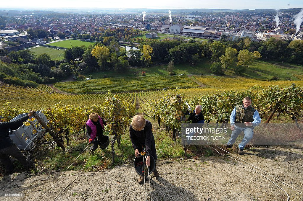 People participate in the grape harvest of the Grand Cru Rangen, on October 17, 2012 in Thann, eastern France. The rows of the vineyard overhangs the city with a gradient of 45 to 100.