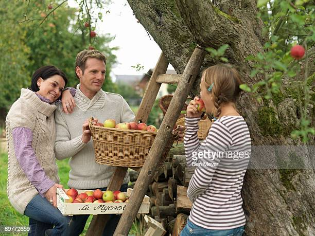 People picking apples in baskets