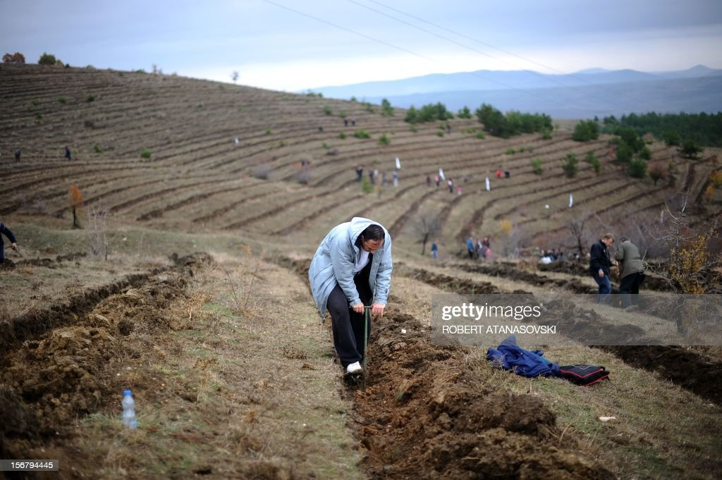 """People plant trees on a hill slope near Skopje on November 21, 2012. Macedonia is planting today about 3 million trees throughout the country under the motto """"Tree Day - Plant Your Future'."""