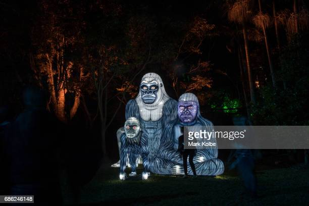 People pose in the Gorillagram installation one of the giant illuminated animal sculptures on display at Taronga Zoo during a media call ahead of...