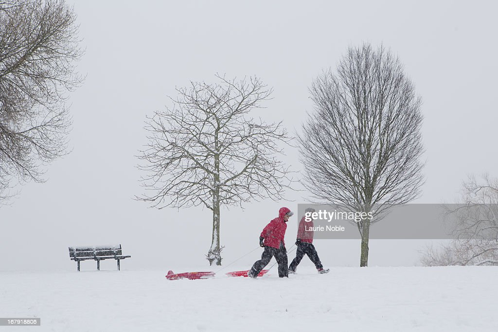 People pulling sledges in the snow, Brockley : Stock Photo