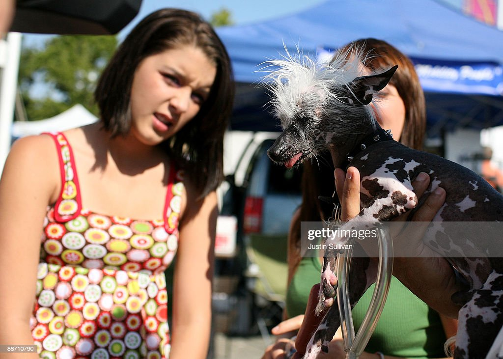 People react as they look at Rascal, a Chinese Crested, before the start of the 21st Annual World's Ugliest Dog Contest at the Sonoma-Marin Fair June 26, 2009 in Petaluma, California. Pabst, a four year-old boxer mix won the annual World's Ugliest Dog contest.