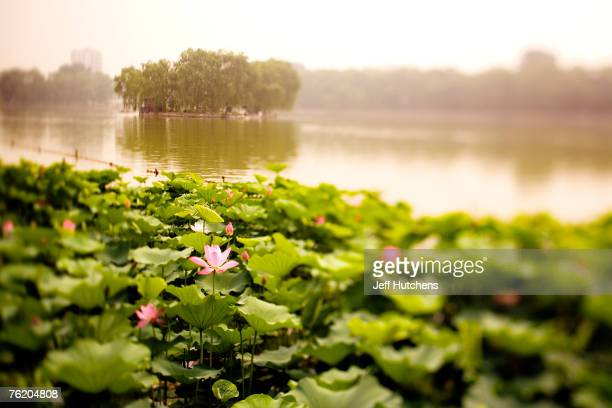 People relax in Beihai Park on June 30 2006 in Beijing China China continues to open both socially and economically with the 2008 Summer Olympics on...