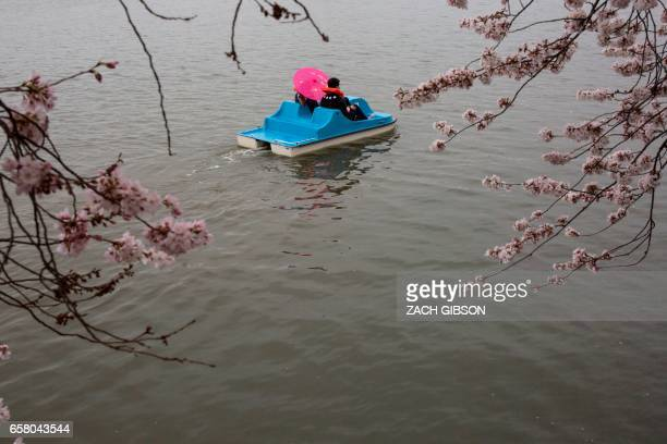 People ride in a paddle boat in the Tidal Basin as Cherry Blossoms bloom March 26 2017 in Washington DC / AFP PHOTO / ZACH GIBSON