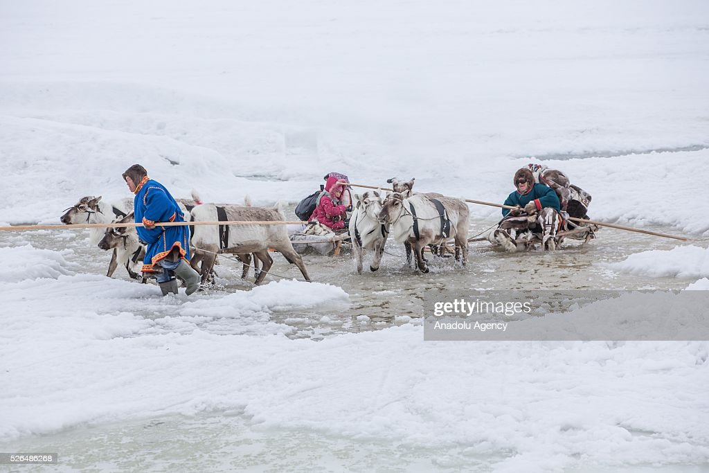People ride reindeers' sled in melting snow at the north of Yamal Gyda, the northernmost settlement of the Yamalo-Nenets Autonomous Okrug in Russia on April 27, 2016. Effects of global warming are seen more clearly every year as north gets warmer and spring comes sooner. This situation makes residents and reindeer harders' life very difficult.
