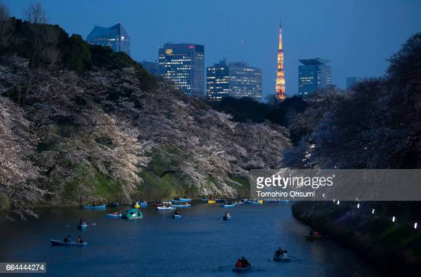 People ride row boats near cherry trees in bloom as the Tokyo Tower stands illuminated at night at the Chidorigafuchi moat on April 4 2017 in Tokyo...
