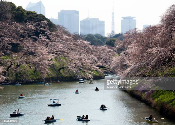 People ride row boats near cherry trees in bloom as the Tokyo Tower stands at the Chidorigafuchi moat on April 4 2017 in Tokyo Japan Japan's cherry...