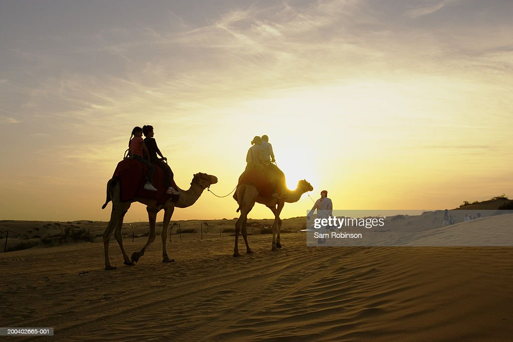 people riding on camels in desert, sunset