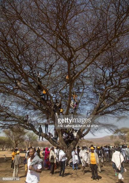 People sit in a tree during the Gada system ceremony in Borana tribe Oromia Yabelo Ethiopia on March 7 2017 in Yabelo Ethiopia