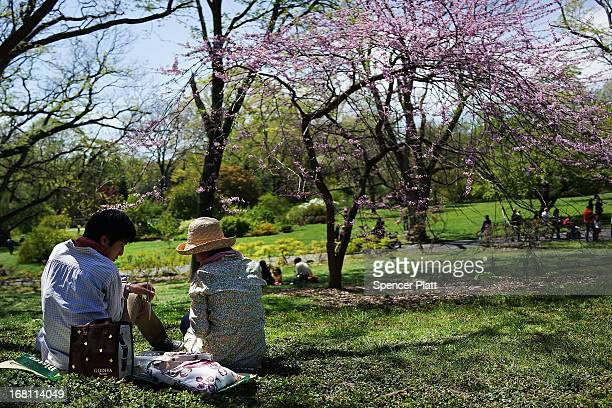 People sit under cherry blossom trees at the Brooklyn Botanical Garden on May 5 2013 in New York City The botanical garden which sits on 52acres...