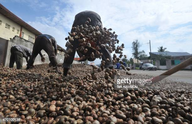 People spread cashew nuts in order to dry them on May 5 2013 in Abdijan The 2014 commercialisation of the cashew nut has been launched on February 18...