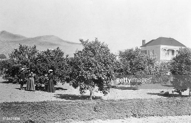 People stand in an orange orchard in Los Angeles County California an area which will later become the busy section of Hollywood Boulevard and...