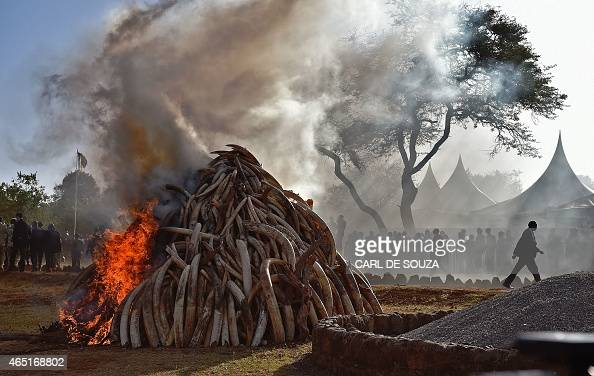 People stand near a burning pile of 15 tonnes of elephant ivory seized in kenya in Nairobi National Park on March 3 2015 Kenyan President Uhuru...