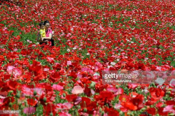 People stroll in a poppy field in full bloom at the Showa Memorial Park in Tachikawa suburban Tokyo on May 15 2010 Visitors will be able to enjoy...