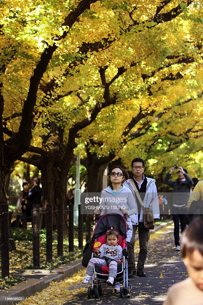 People stroll under yellow ginkgo tree leaves in Tokyo on November 18, 2012. Local residents came out to admire some 150 ginkgo trees displaying their autumnal colors along the tree-lined promenade. AFP PHOTO / Yoshikazu TSUNO