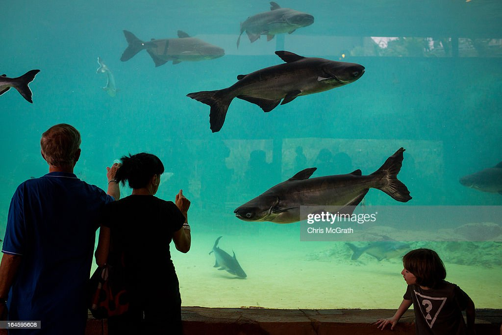People take in a fish exhibit in the Mekong River habitat during a media tour ahead of the opening of River Safari at the Singapore Zoo on March 25, 2013 in Singapore. The River Safari is Wildlife Reserves Singapore's latest attraction. Set over 12 hectares, the park is Asia's first and only river-themed wildlife park and will showcase wildlife from eight iconic river systems of the world, including the Mekong River, Amazon River, Congo River through to the Ganges and the Mississippi. The attraction is home to 150 plant species and over 300 animal species including 42 endangered species. River Safari will open to the public on April 3.