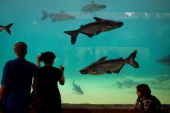 People take in a fish exhibit in the Mekong River habitat during a media tour ahead of the opening of River Safari at the Singapore Zoo on March 25...