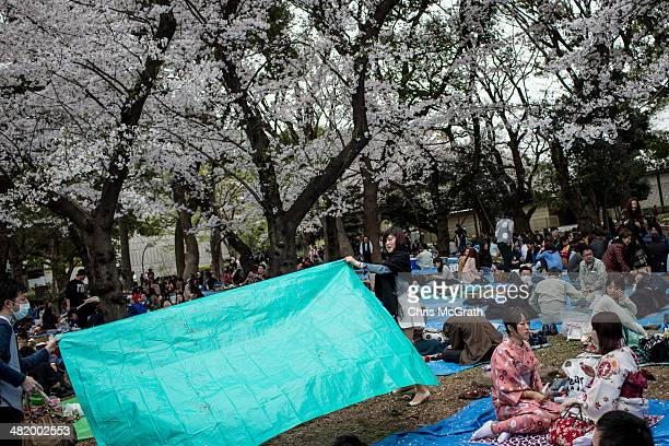 People take part in ' Hanami' or Flowerviewing parties under cherry blossom trees in full bloom in Ueno Park on April 2 2014 in Tokyo Japan The...