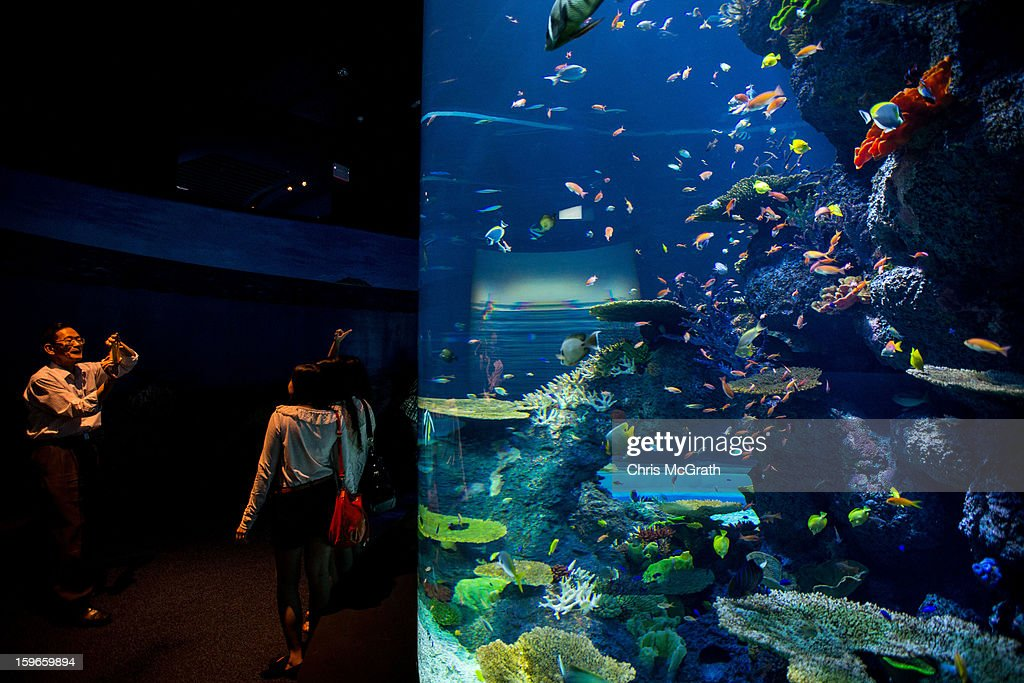 People take photographs in front of an aquarium at Resort World Sentosa's Marine Life Park, January 18, 2013 in Singapore. The Marina Life Park is Resort World Sentosa's newest attraction and is the world's largest aquarium, with 100,000 marine animals of over 800 species housed in 45 million litres of water.