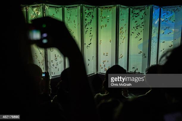People take photographs of Kingyo on display at the 'Eco Edo Nihonbashi Art Aquarium 2014' exhibition at the Nihonbashi Mitsui Hall on July 15 2014...