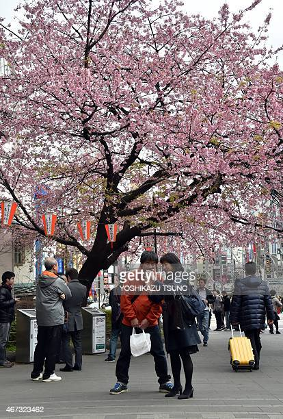 People take photos in front of a cherry blossom tree in bloom at a park in Tokyo on March 23 2015 Spring officially arrived in Tokyo on March 23 when...