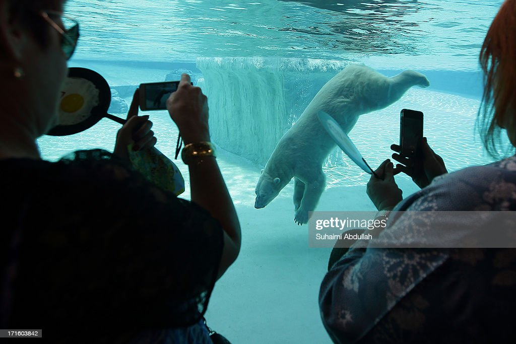 People take photos of the polar bear 'Inuka' in the frozen tundra enclosure at the Singapore Zoo on June 27 2013 in Singapore Home to more than 2800...