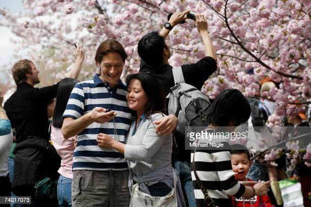 People take pictures in front of the cherry blossoms at the Brooklyn Botanic Garden's during the Cherry Blossom Festival on April 28 2007 in the...