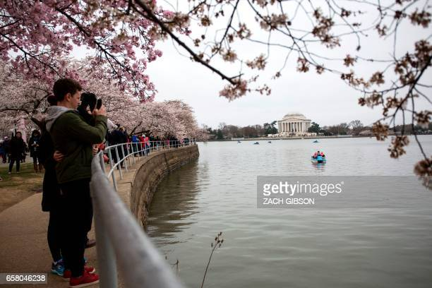 People take pictures near the Tidal Basin as cherry blossoms bloom on March 26 2017 in Washington DC / AFP PHOTO / ZACH GIBSON