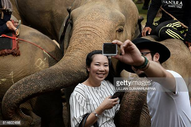 People take selfies with the elephants at the 14th annual King's Cup Elephant Polo Tournament in Bangkok on March 10 2016 The King's Cup Elephant...