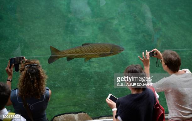 People takes pictures of fish on June 23 2017 at Beauval zoo in SaintAignansurCher / AFP PHOTO / GUILLAUME SOUVANT