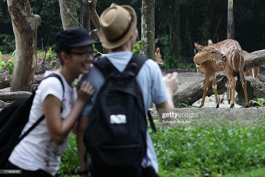 People view a female Nyala at Singapore Zoo on June 27 2013 in Singapore Home to more than 2800 animal animals from over 300 species 26% of which are...
