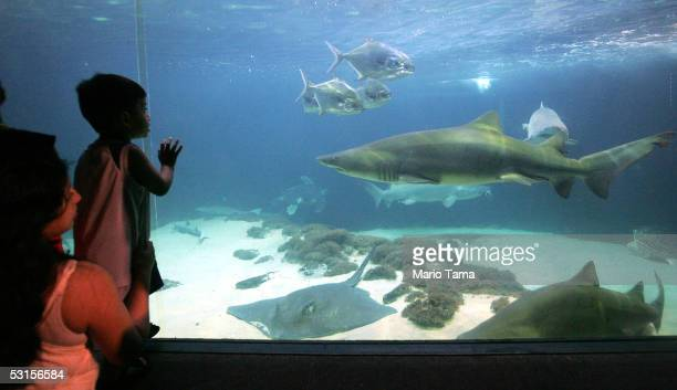 People view a shark tank at the New York Aquarium in Coney Island June 27 2005 in the Brooklyn borough of New York City A teenage boy was attacked by...
