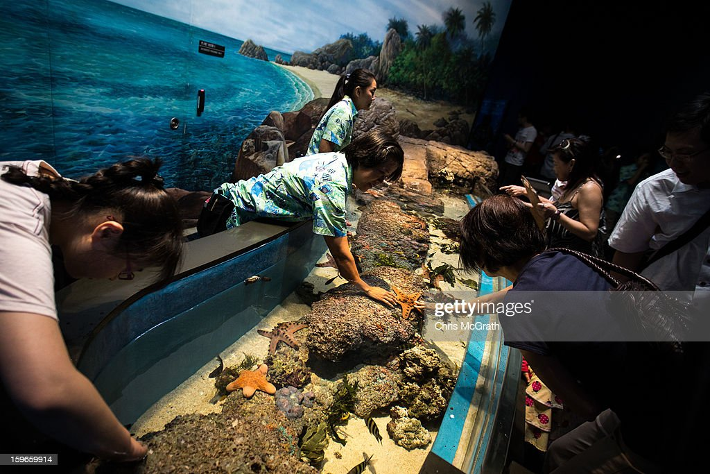 People view the touch tank display at Resort World Sentosa's Marine Life Park, January 18, 2013 in Singapore. The Marina Life Park is Resort World Sentosa's newest attraction and is the world's largest aquarium, with 100,000 marine animals of over 800 species housed in 45 million litres of water.